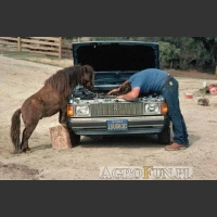 Koń mechanik